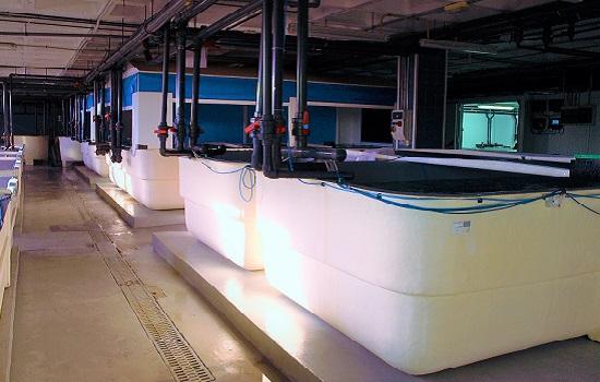 Laboratorio cultivos marinos